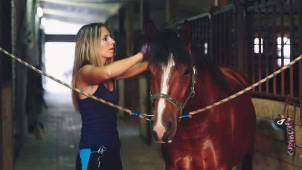 pansage cheval