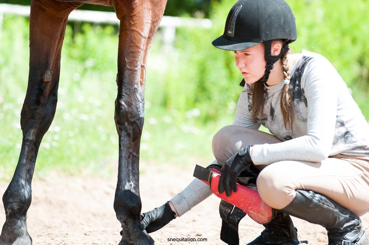 Comment bien poser des guêtres à son cheval.