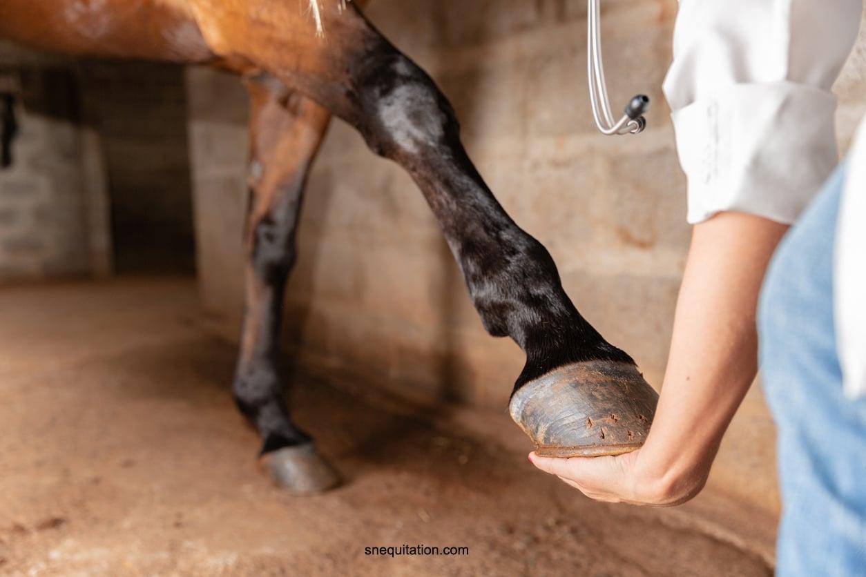 Quels chevaux doivent porter des guêtres