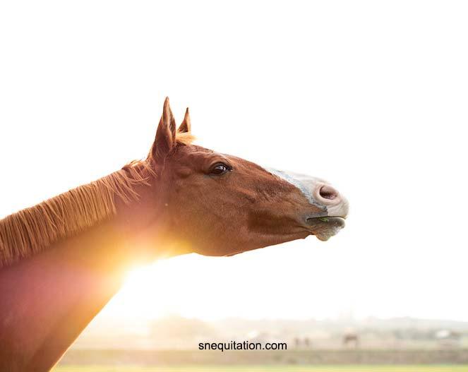 Le regard si expressif du cheval
