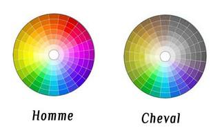 Les couleurs que voit le cheval