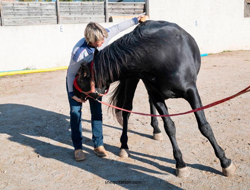 La discipline de l'ostéopathie équine