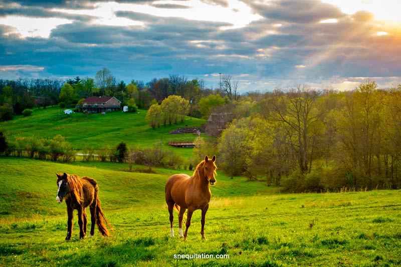 Quelle alimentation pour un cheval au pré