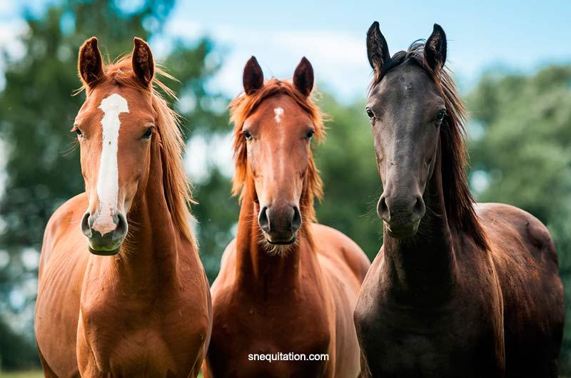Une selle adaptée à la morphologie de son cheval