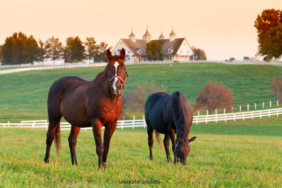 Comment trouver un pré pour son cheval ?