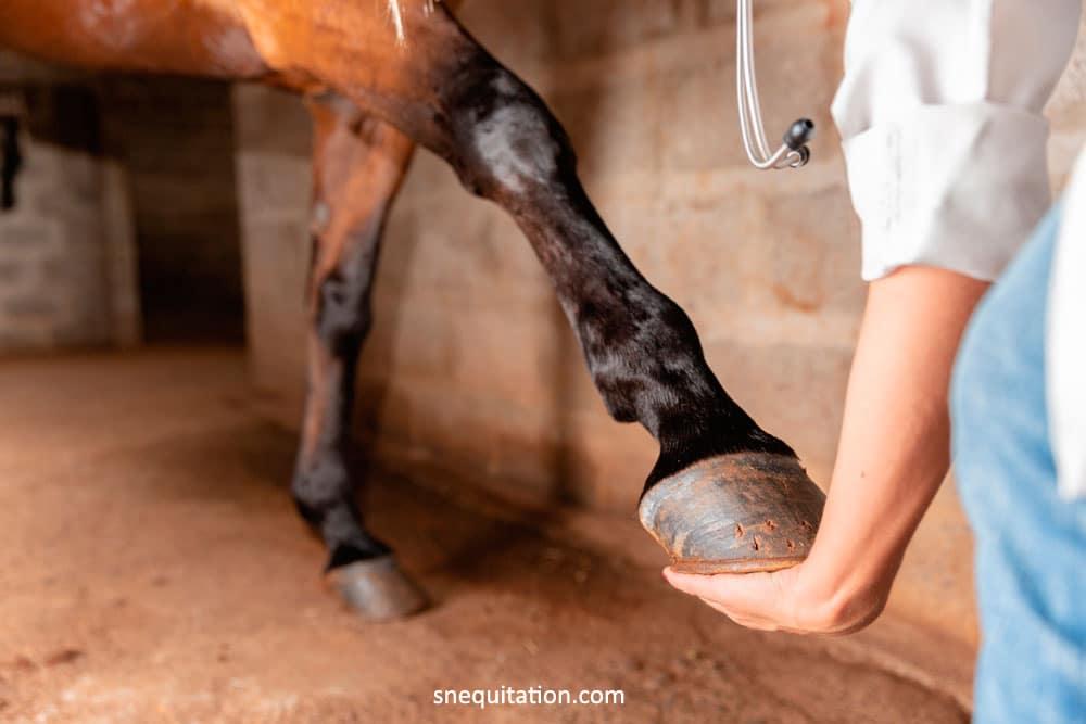 Entorse du boulet du cheval